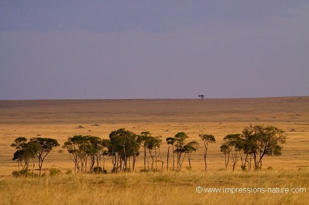 la galerie thierry duval impressions nature paysage de savane 77200. Black Bedroom Furniture Sets. Home Design Ideas